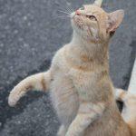 Katze auf dem Weg nach Preikestolen