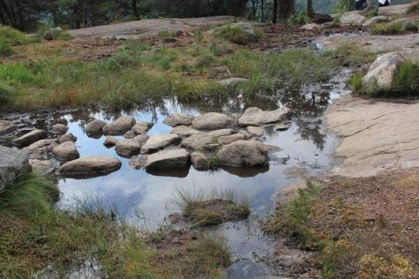 Steine durch den Sumpf zum Preikestolen