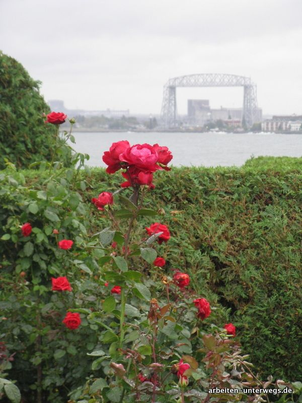 Leif Erikson Rose Garden in Duluth am Lake Superior