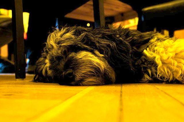 Lilly, tierischer Teilnehmer am OMTalk14