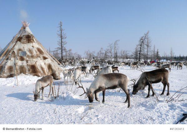 Sibirische Nomaden mit Tipi und Rentieren