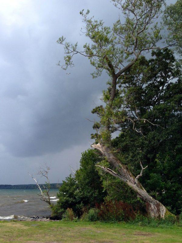 Ein Baum im Wind vor dunklen Gewitterwolken
