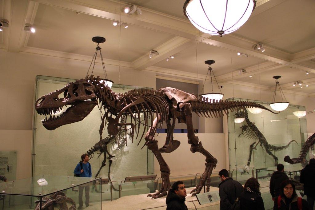 Skelett von einem Tyrannosaurus Rex im American Museum of National History