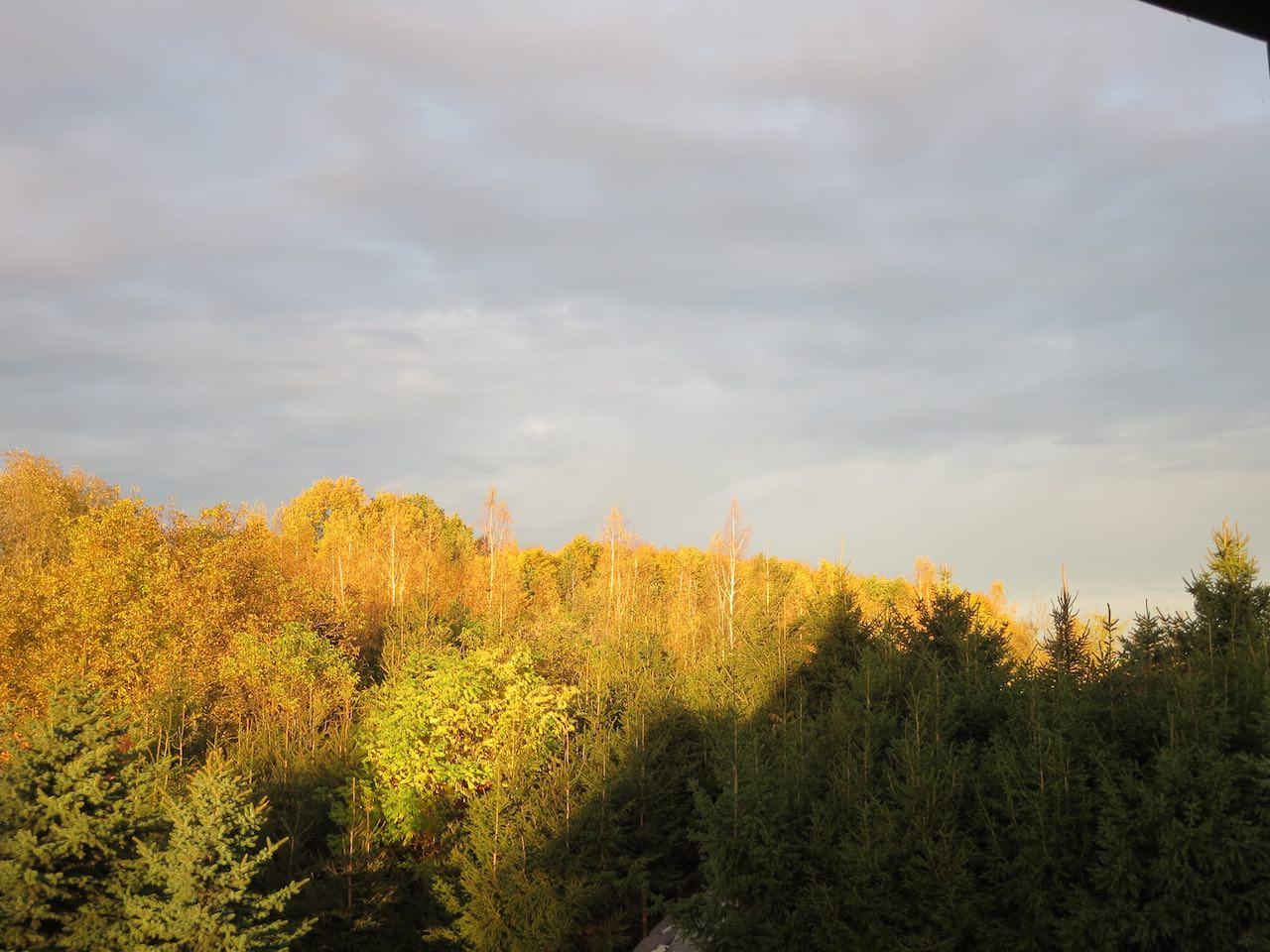 Ein Waldrand halb in der Sonne halb im Schatten