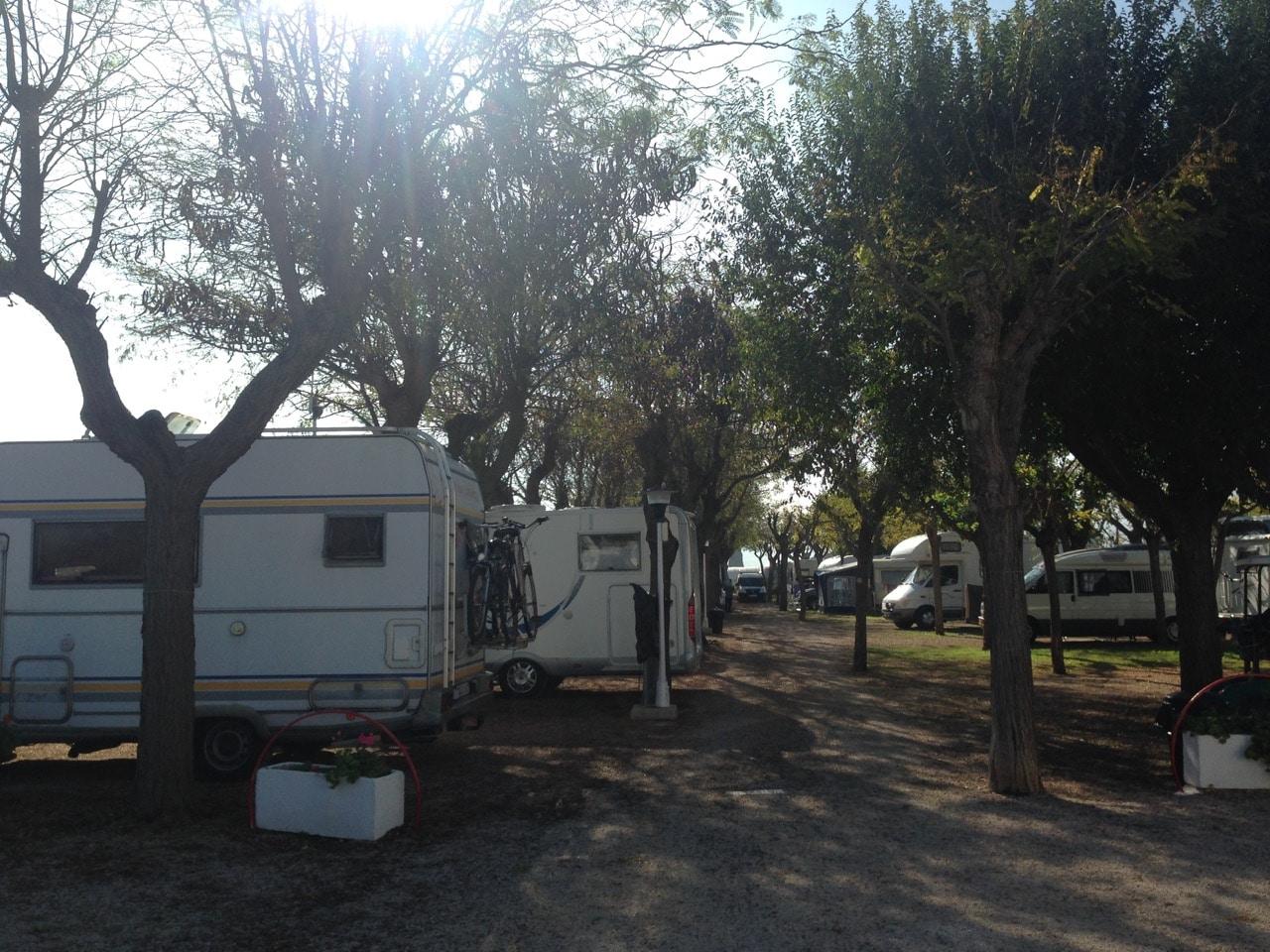 Ein baumgesäumter Weg und Wohnmobile zwischen den Bäumen