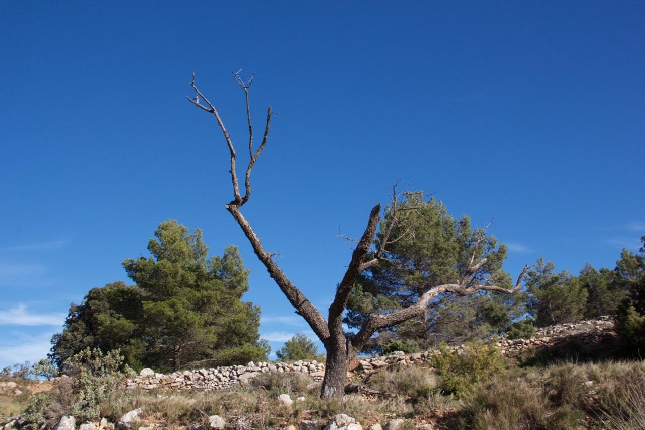 Ein kahler Baum vor blauem Himmel