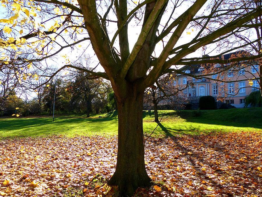 Im Vordergrund ein herbstlicher Baum im Hintergrund ein Herrenhaus