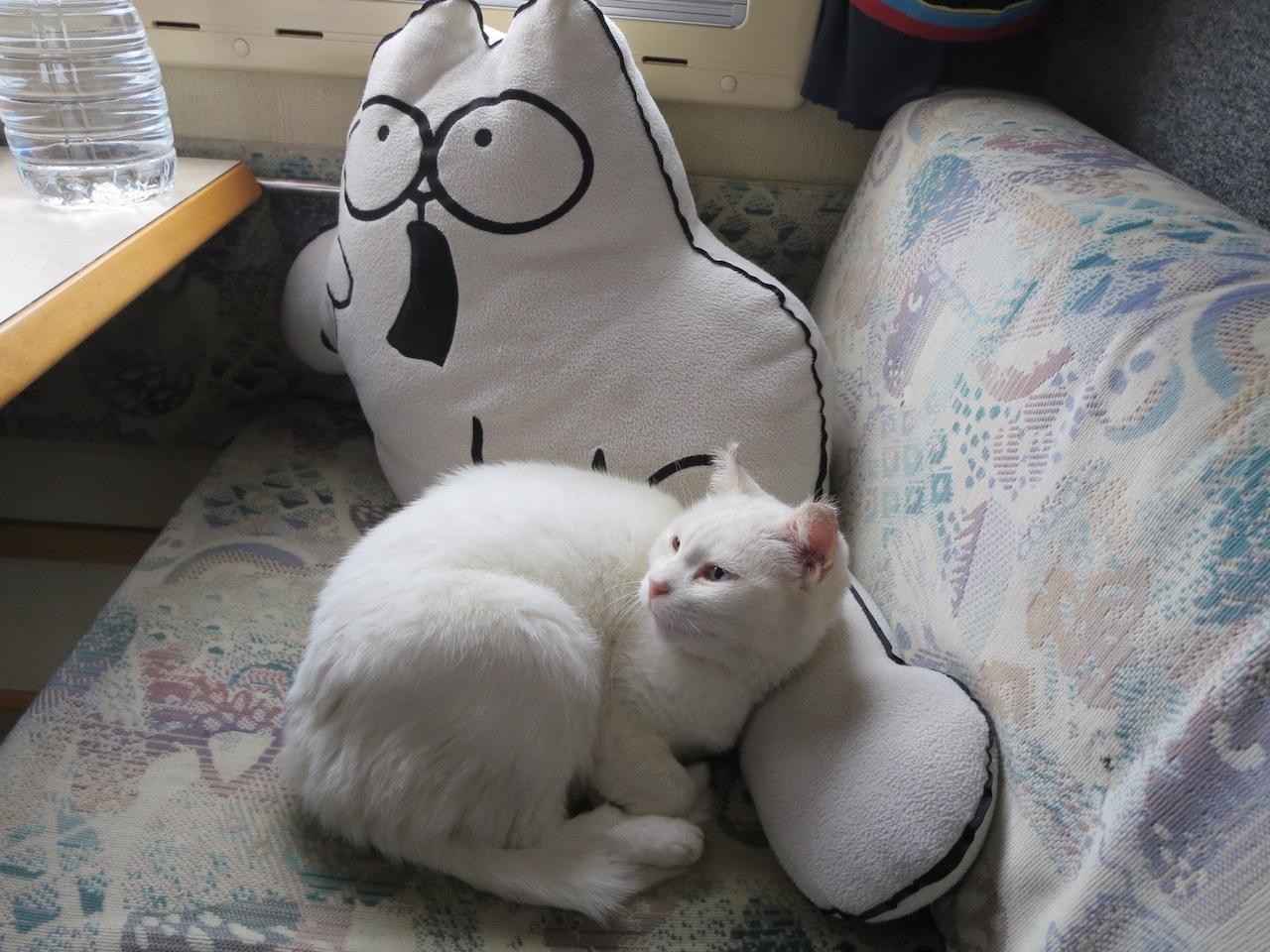 Eine Katze kuschelt mit einer Kissen-Katze in einem Wohnmobil