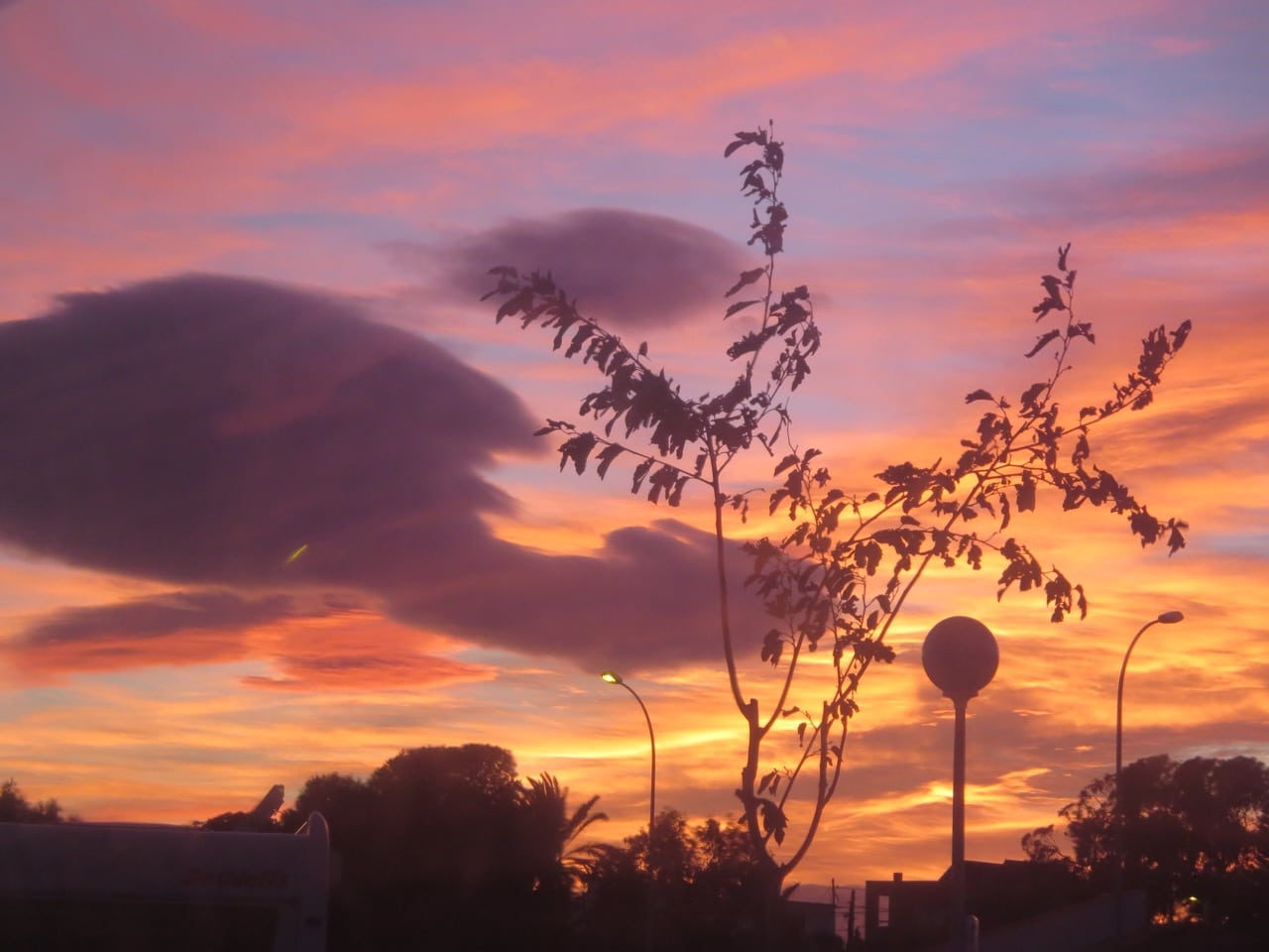 Ein roter Abendhimmel, im Vordergrund ein kleiner Baum