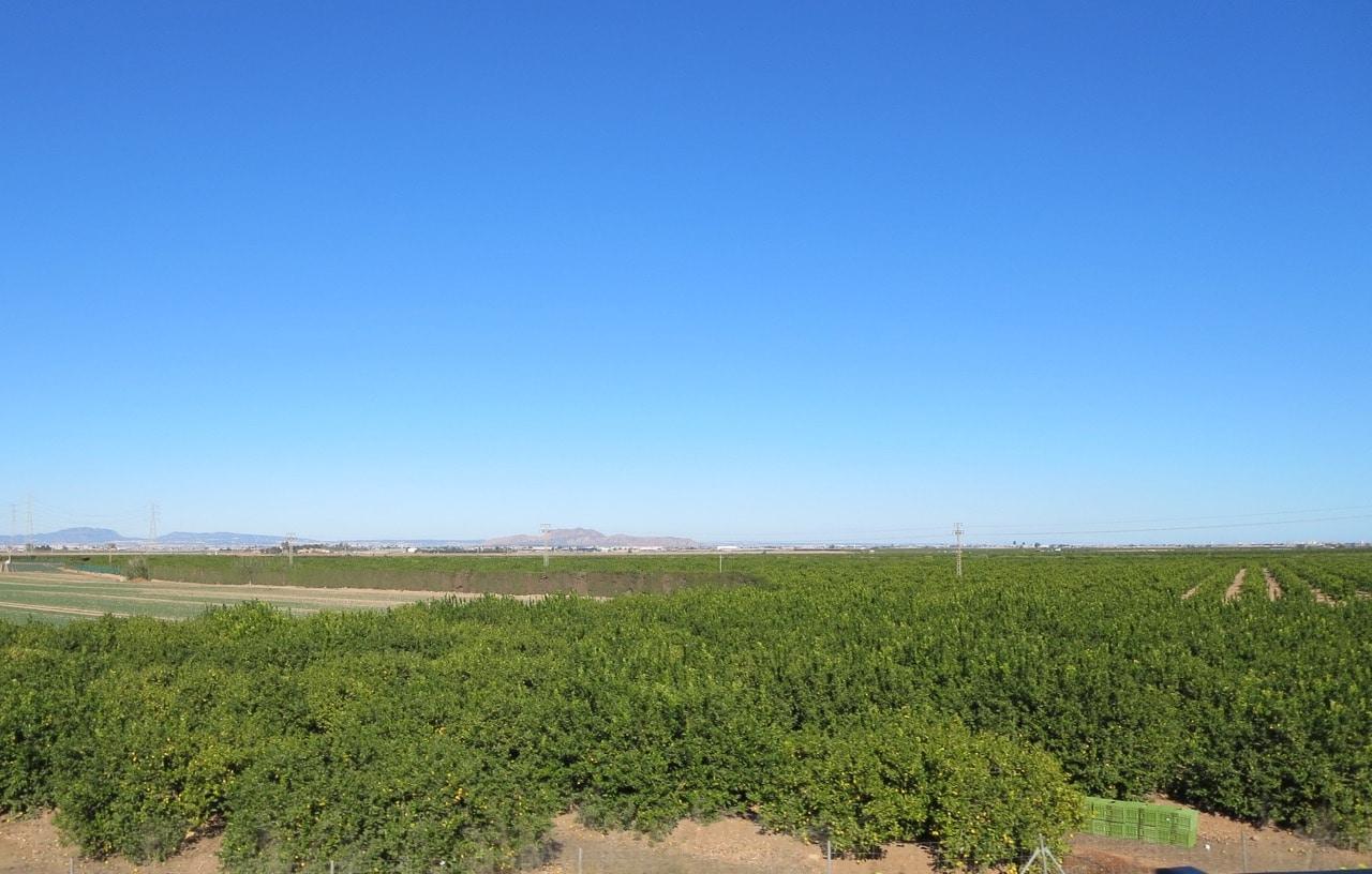 Der Blick über viele Mandarinenbäumchen und im Hintergrund blauer Himmel und Berge
