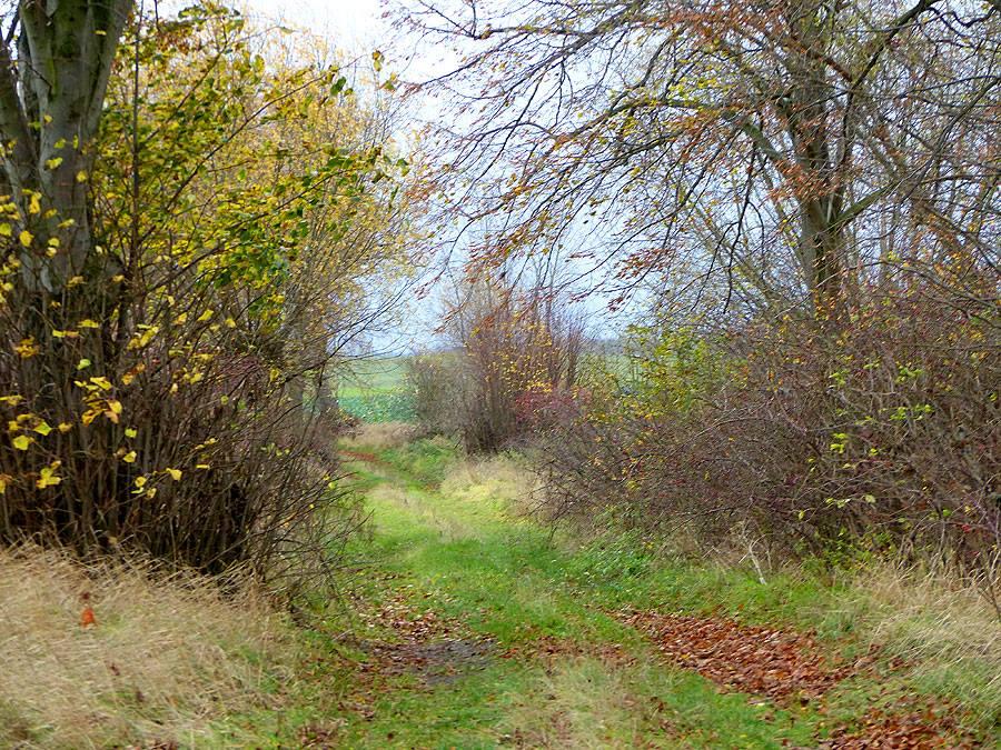 Ein Feldweg im herbstlichen Wald