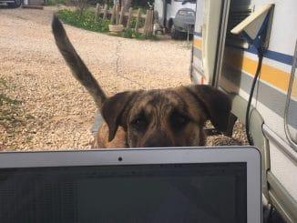 Ein Hund schaut über den Rand von einem Laptop