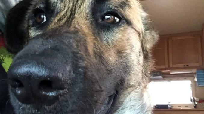 Ein Hund mit heraushängender Zunge