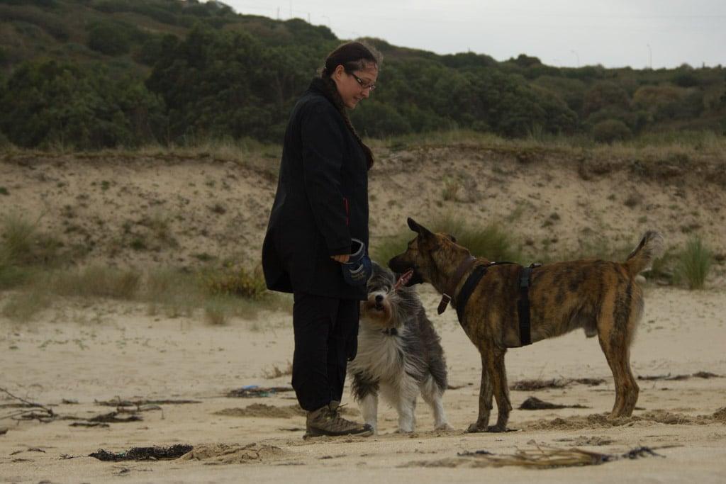 Zwei Hunde stehen erwartungsvoll vor einer Frau mit Futterbeutel am Strand