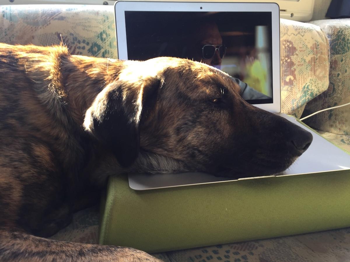 Ein Hund liegt mit dem Kopf entspannt auf der Tastatur eines Laptops