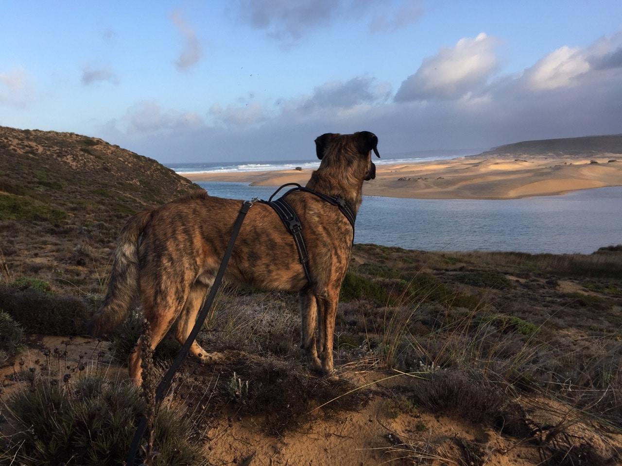 Ein Hund steht auf einem Felsen und schaut auf das Meer und den Strand.