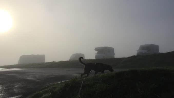 Die Sonne scheint durch den Nebel, schattenhaft sind ein Hund und dahinter Fahrzeuge zu sehen